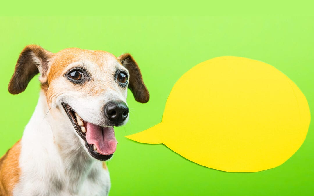 Do Dogs Talk?
